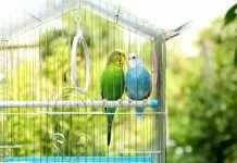 विदेशी प्राणी-पक्ष्यांची आता वन विभागाकडेही नोंदणी सक्तीची
