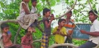 online school on tree in nadurbar