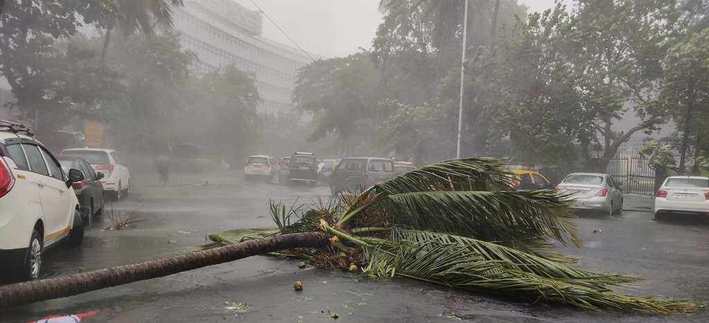 Mumbai Rains tree collapsed