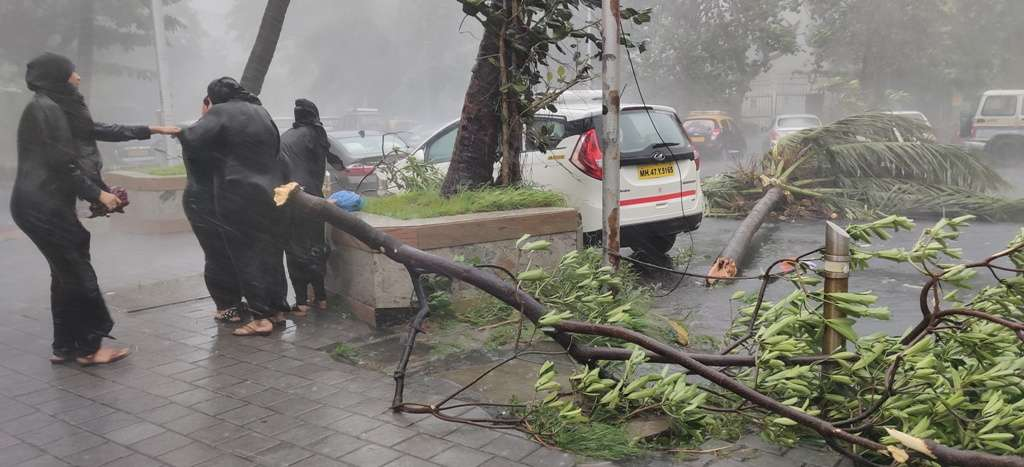 Mumbai Rains 3 tree collapsed
