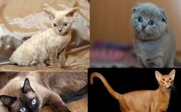 See different types of cats