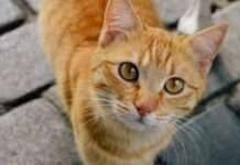 international cat day 2020 know the history and true facts about international cat day