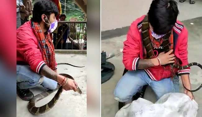 king cobra rescued from a house at nainital terrifying video is going viral