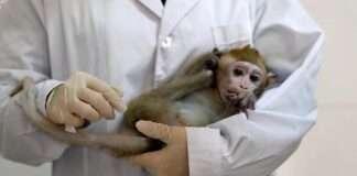 monkeys shortage delay coronavirus vaccine