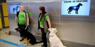 dog, corona test