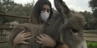 how donkeys are helping spain coronavirus frontline workers cope with the pandemic