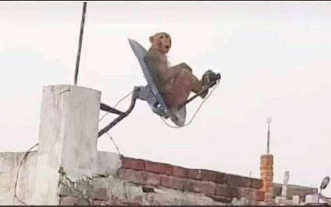 DTH monkey