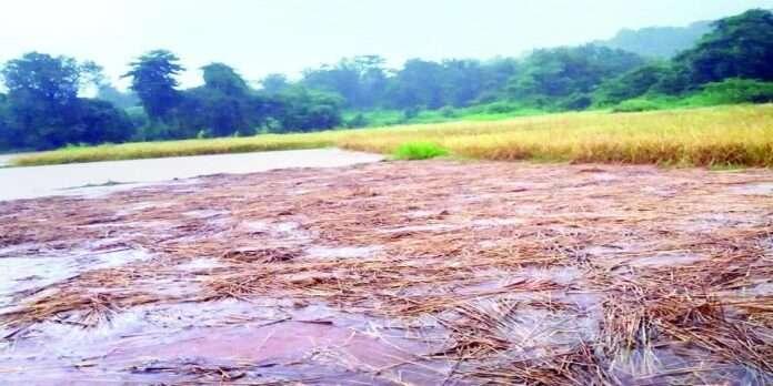 Most damage to Wada taluka due to return rains