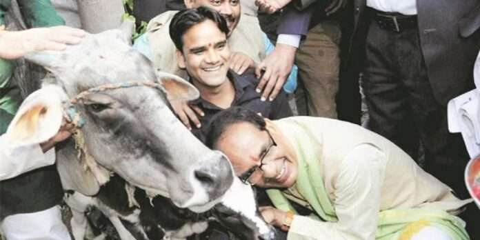 mp govt set up gau cabinet for cow protection