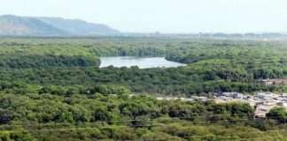 Appoint special vigilance team for protection of mangrove
