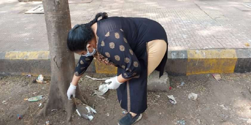 bird flu crisis in maharashtra now many birds died on the streets of thane
