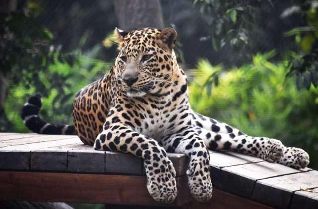 Veermata Jijabai Bhosale Park and Zoo Rani Bagh opened for tourism