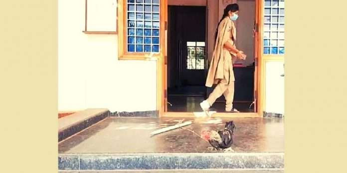 hen arrested in murder charge a1 hen in police station this is the story