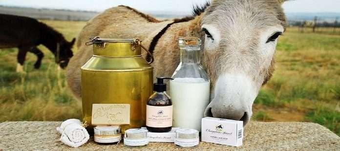 Donkey_milk1