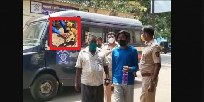 people not use mask and attack on police through dog at dombivali