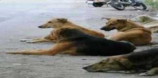 Stray dog burnt alive in Thane