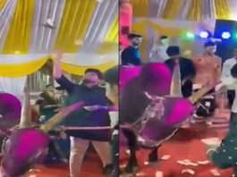 groom Dancing with bulls in haldi Function at kalyan chichapada, breaking corona rules filing charges against groom and his father