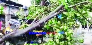 Thane tutke cyclone