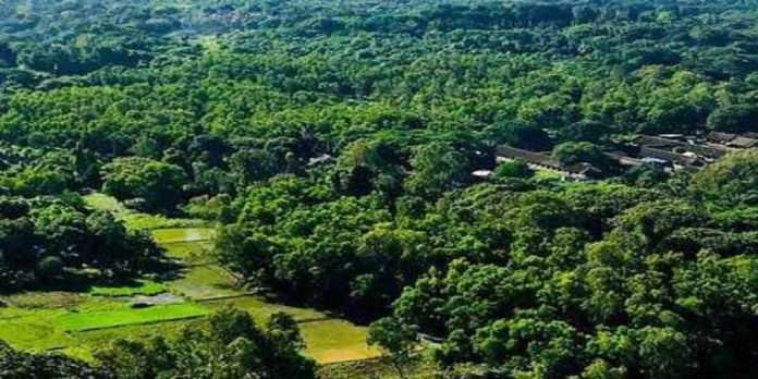 aarey 812 acres of land has been officially handed over to the forest department