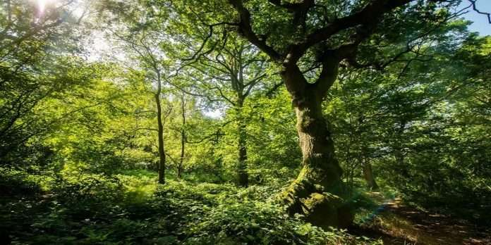 Heritage tree: Protect ancient, very ancient trees in cities