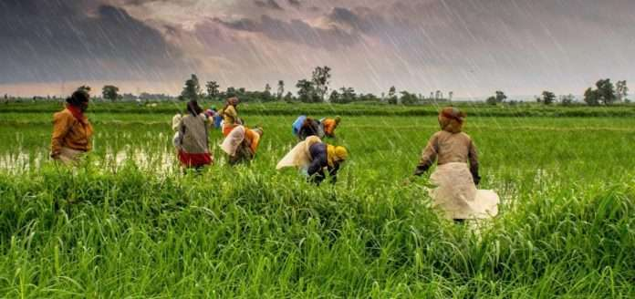 Cabinet approves the increase in MSP for Kharif Crops for marketing season 2021-22