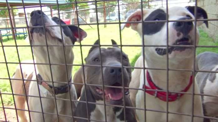 US bans dogs brought in from 100 countries with rabies risk