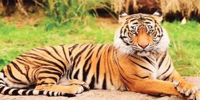 International Tiger Day: 14 tiger reserves set global standard tiger conservation in India