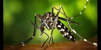 What is Zika virus illness? Precautions, symptoms, vaccine, treatment, here's everything you must know