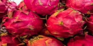 More and more farmers should apply for dragonfruit cultivation under horticulture scheme