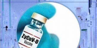 zydus cadila corona vaccine news all you need to know about zycovd