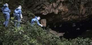 1st West African Case Of Deadly Marburg Virus Detected WHO