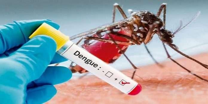 More than 900 dengue patients in Madhya pradesh