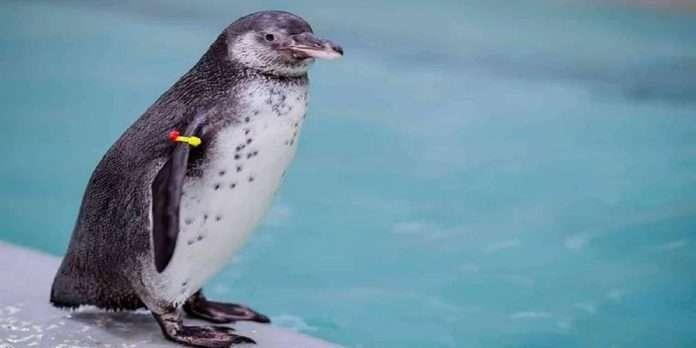 Mumbai Rani Baug Penguins