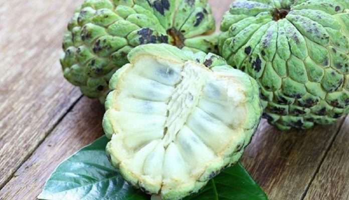 Benefits and side effects of custard apple