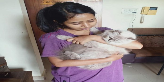 actress Gauri Kulkarni's cat trapped in gallery rescued by the disaster management