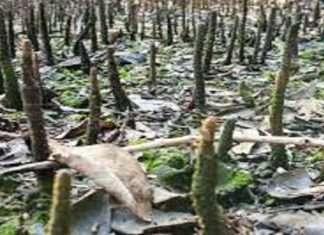 Uran: Take action against those who killed Tiwari in Karanja Khopta Bay, otherwise