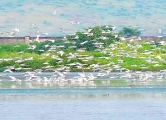 Migratory birds affect Navi Mumbai Airport